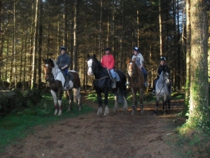 Meadow Lane Riding school