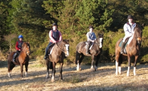 Shelmalier Riding stables