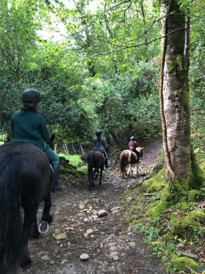 Muckross Horse Riding Centre